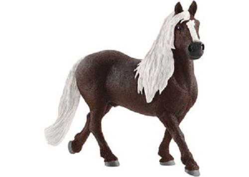Black Forest Stallion