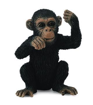 Chimpanzee Cub Thinking