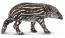 Bairds Tapir Calf