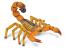 Yellow Fat Tailed Scorpion