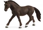 German Riding Pony Gelding