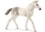 Holsteiner Foal