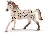 Knabstupper Stallion