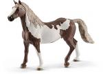 Paint Horse Gelding