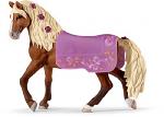 Pasafino Stallion Horse Show