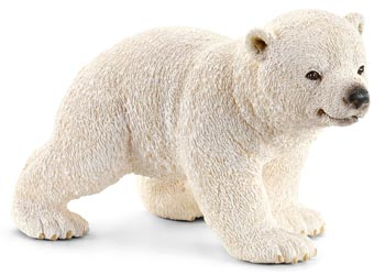 Polar Bear Cub Walking